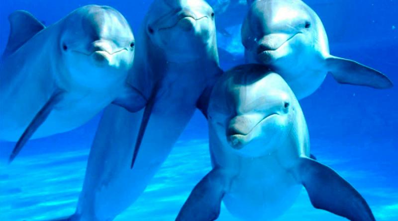 grupo de delfines posando a cámara