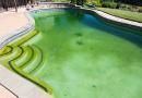 algas piscina como quitar