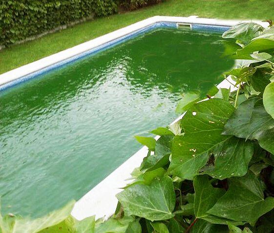 Piscina con agua verde